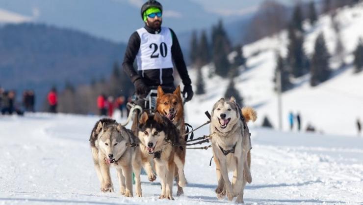 Careianul Daniel Tentiș, câștigător la concursul de sănii trase de câini din Pasul Tihuța